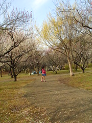 青葉の森の梅園