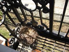 Nest?! April 19