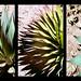 Spikey Plant Triptych by auer1816