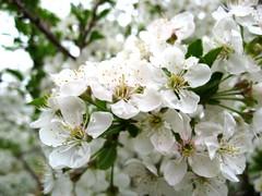 IMG_0007.JPG (Adrian J.K. Shum, CGD) Tags: nature florafauna muhsashumblogspotcom