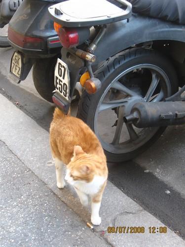 incontro con a-mici a via Alessandria (viale Regina Margherita), non ci crederete, ma vengono verso di me e, il più grosso, cacciato il secondo, si mette in posa dans gatti
