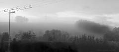 The early birds .... (Elisafox22) Tags: elisafox22 sony rx10iii telegraphpoles wire powerlines birds perching perched trees 52in2017 week7 rookery mist misty morning daybreak window shadows monochrome blackandwhite monotone bw mono greyscale elisaliddell©2017
