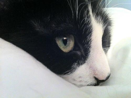 Pensive Kiki