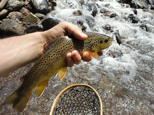Wild Savage River Brown