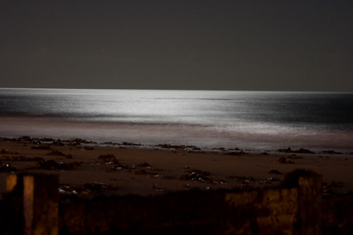 A beach in moonlight