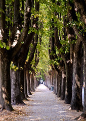 Tree lined path in Lucca (jackie weisberg) Tags: trees vacation italy tree europe image path lucca medieval photograph sunflowers tuscany daytime toscana vacations oldcity pathway treelined colorimage medievalcity
