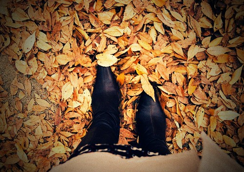 on the fallen leaves