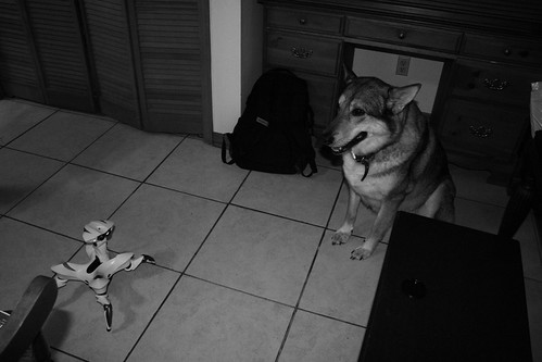 Roboquad frente a un perro