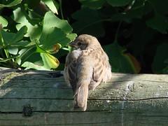 BIRD (karen o'reilly) Tags: bird treetrunk