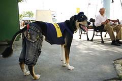 Boca Juniors desde perrito (poperotico) Tags: dog co argentina buenosaires perro cachorro laboca caminito bocajuniors sigma1020 torcedor