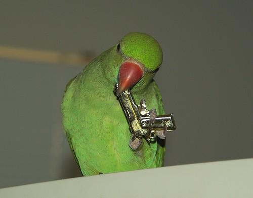 Pájaro suicida