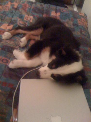 Coco Had a Rough Day