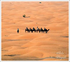 Ship of the desert (andzer) Tags: trip tower sahara fauna observation sand ship desert post tunisia august andreas greece camel oasis macedonia thessaloniki caravan ksar 2007 myfaves salonica  zervas  ysplix ghilan andzer