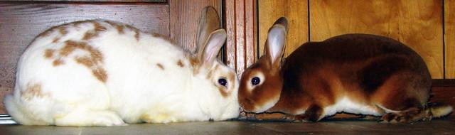 Ifurry and Hare E Houdini