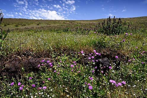 Flowerscape, Chikmaglur