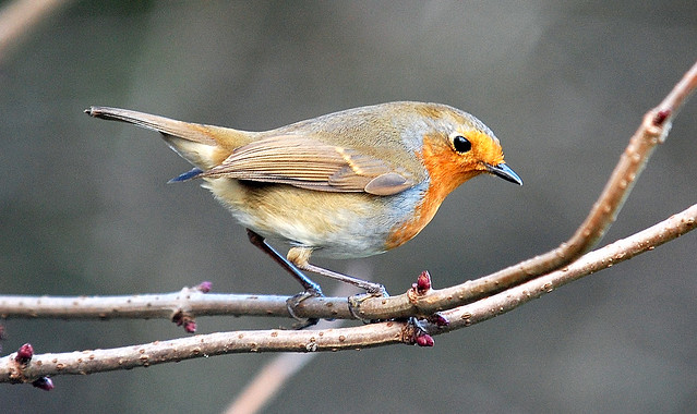 Robin Whisby NR
