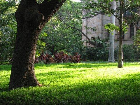 light on the grass IISc 180408