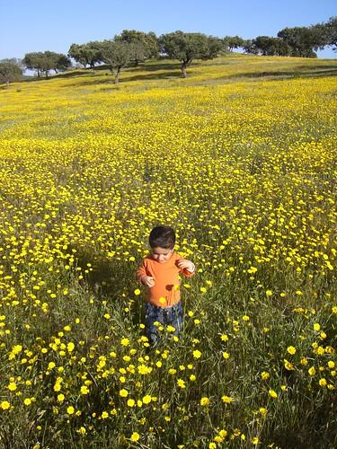 Roberto en campo de flores