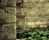 I fear... (Nuhatoa) Tags: old house wall grey vines ancient fear bricks blues haunted hide ghosts lonely ladder scared soe addu nuha feydhoo fenuparee samatoa nuhatoa