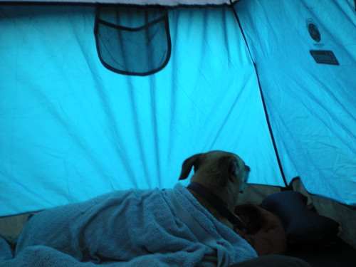 Lucy in the tent