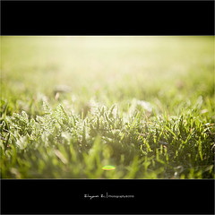 Golden hour (Ziyan | Photography) Tags: light sunlight white canada grass yellow backlight canon quebec bokeh montreal 5d  goldenhour      ziyan    24105mm canonef24105mmf4lisusm