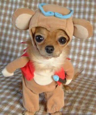 funny-dog-costume