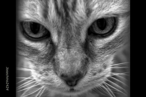 Mirada felina.