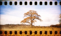 holga | 35mm | sprockets #3 (slimmer_jimmer) Tags: autumn tree holga autumncolours oaktree ashridge c41 sprocketholes 35mminholga ashridgeforest