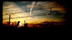Lignes, couleurs, vitesse. (JMC - PHOTO) Tags: sunset sky france train ciel trainscape couherdesoleil onlythebestare