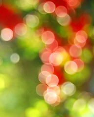 oooooooo (faungg's photos) Tags: christmas red plants sun holiday green nature sunshine garden beans backyard flickr december bokeh picture celebration glowing gardener  d40x
