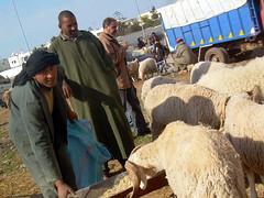 urban shepherd (Corinne Béguin) Tags: sheep morocco maroc casablanca mouton aïd