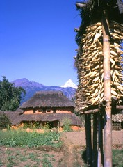 Pokhara House, Nepal, 1968 (east med wanderer) Tags: nepal house mountains garden 1968 pokhara maize himalayas fishtail machapuchare theindiatree