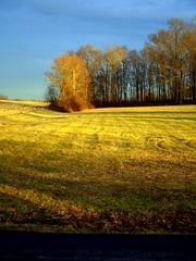 Colors of Winter (Violet Illusion) Tags: soe abigfave anawesomeshot impressedbeauty megashot