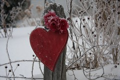 Heart in Love (Cabinet of Old Secret Loves) Tags: red roses snow love fence opera frost heart badge phantom society6