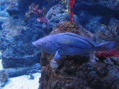 Visita a L'Aquarium