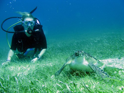 turtlegirl