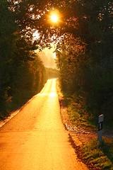 (359) Sonntagmorgen (avalon20_(mac)) Tags: road street morning autumn light sun tree nature fog sunrise germany europe nebel alemania tyskland allemagne duitsland eos40d