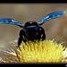 El declive de las abejas, estirando el ADN, arqueología submarina y murciélagos
