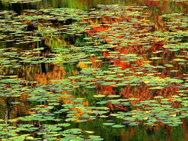 Monet's Red and Green