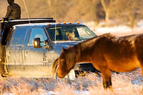 Feeding Horses 089