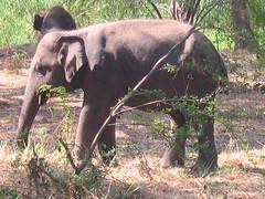 Baby elephant camp 2