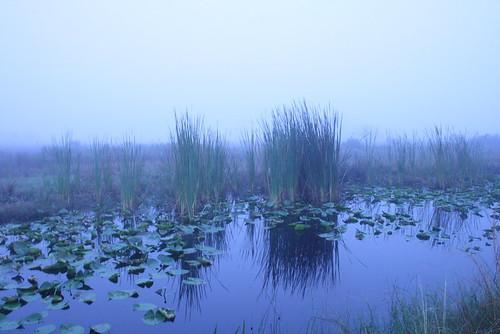 kissimmee prairie state park 1-12-08 215