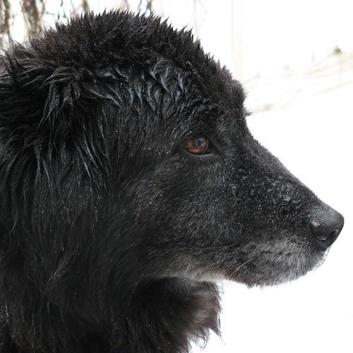 0981 Kizzy in winter