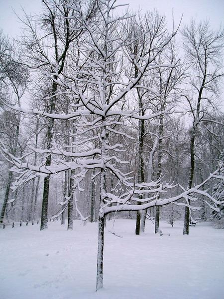 Guildwood Park (4)