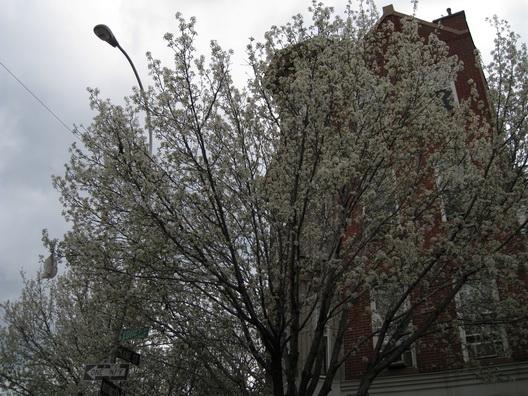Brookspring -- Court Street