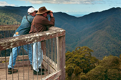 IMG_6072_Dorrigo_National_Park