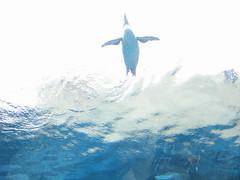 旭山動物園 ペンギン館