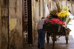 Scene di ordinaria fatica (sabrinac78) Tags: street flowers people italy canon europa europe italia gente explore sicily fiori palermo sicilia ambulante fiorario flickrsicilia rgsmestieri regionalgeographicsicilia artedellafoto