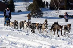 Dog Sled (Luc Deveault) Tags: dog chien canada animal race quebec hiver competition course québec luc sled laurentides winther stagathedesmonts stagathe photosafarimtl deveault classiqueronadagenais psm160208 lucdeveault
