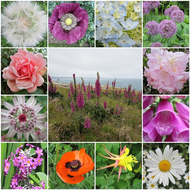 Cornish flowers